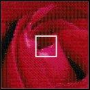 Rosa Pixel